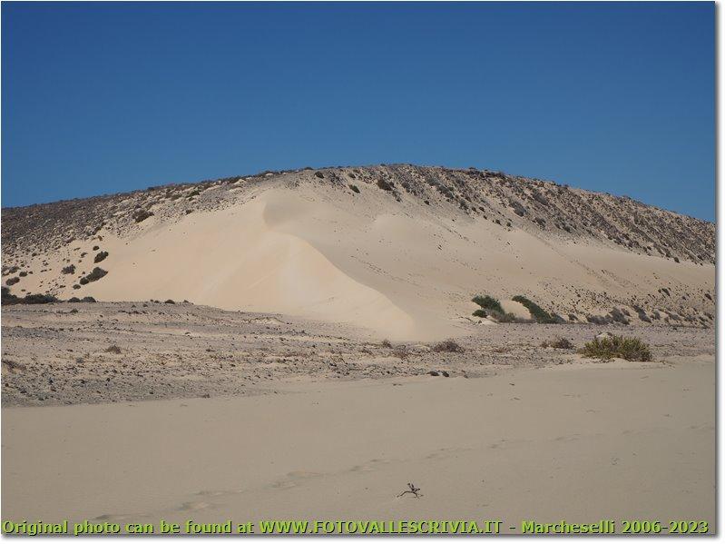 Dunes at Sotavento beach