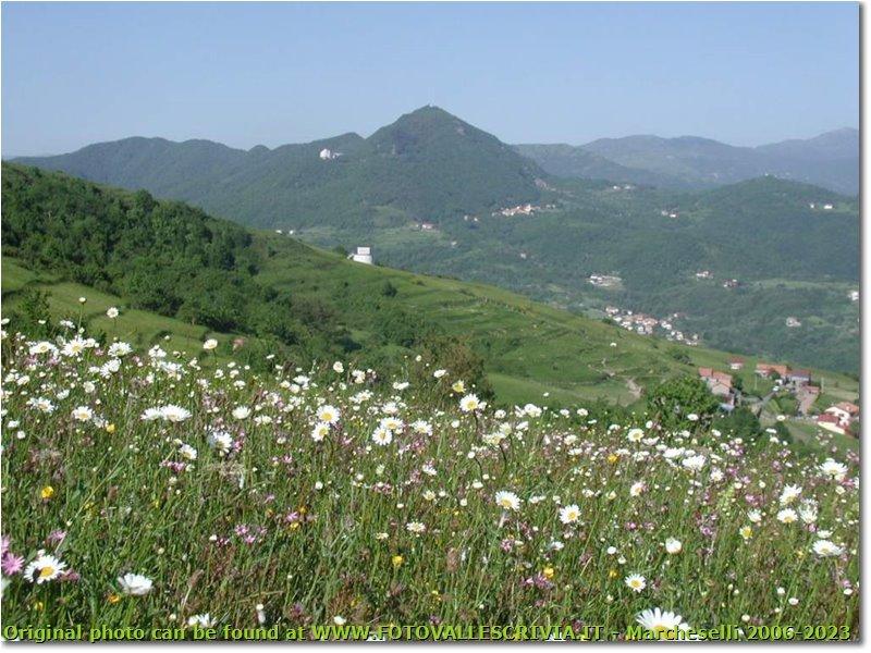 Fotografie Casella - Panorami - Flowering meadow near Gualdrà; in the background Casella and M.Maggio