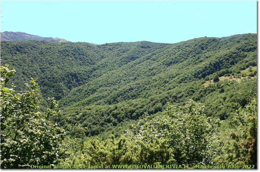 Fotografie Crocefieschi&Vobbia - Boschi - Woods near Crocefieschi