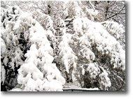 Fotografie Savignone - Altro - 6 Febbraio: prima neve a Savignone