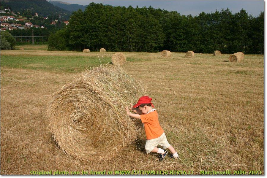 Foto Savignone - Altro - Fienagione a Besolagno: lavoro minorile