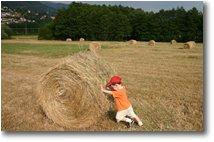 Fotografie Savignone - Altro - Fienagione a Besolagno: lavoro minorile