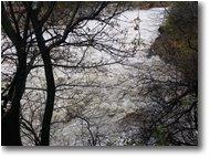 Fotografie Savignone - Altro - Fiume Scrivia dopo abbondanti pioggie