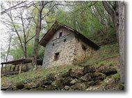 Fotografie Savignone - Boschi - Prime foglie