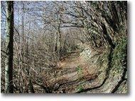 Fotografie Savignone - Boschi - Prime luci della primavera nei boschi