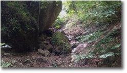 Foto Savignone - Boschi - Risalendo Rio Piambertone