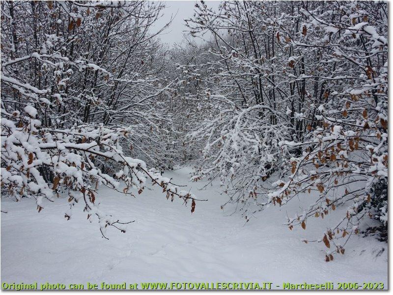 Fotografie Savignone - Boschi - Sentiero nei boschi di Costalovaia