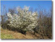 Foto Savignone - Fiori&Fauna - Ritorna la primavera