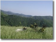 Fotografie Savignone - Panorami - My dog, Brina