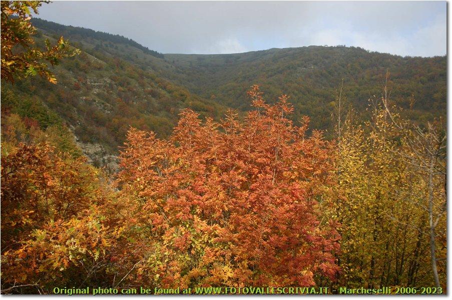 Fotografie ValBrevenna - Boschi - Fall colors in Val Brevenna
