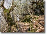 Foto ValBrevenna - Boschi - Path from Crosi to Carsi